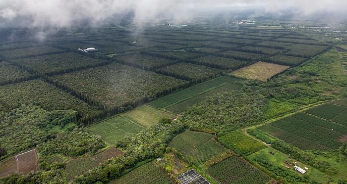 Big Island Blick aus dem Hubschrauber: Plantagen der Mauna Loa Macadamia Nut Corporation Luftbild aerial photo