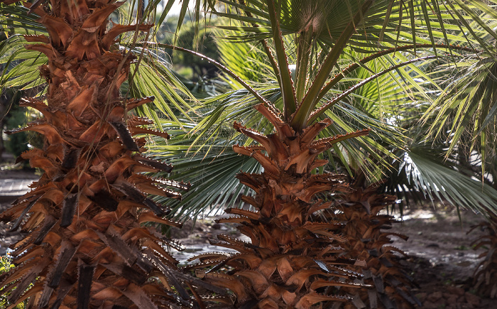 Marrakesch Koutoubia-Gärten