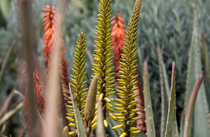 Marrakesch Le Jardin Secret: Exotischer Garten