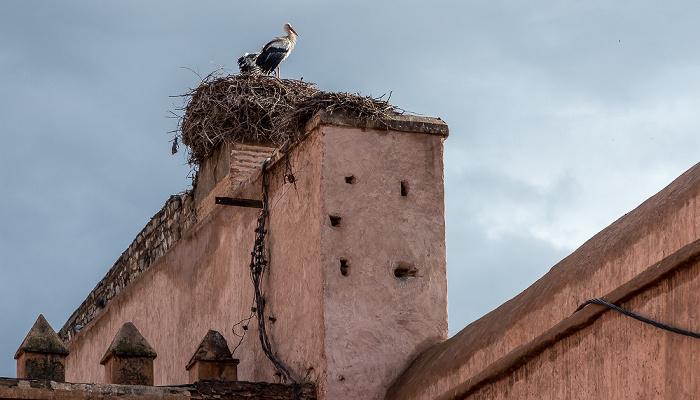 Marrakesch Bab Agnaou: Störche