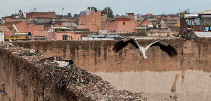 Marrakesch Palais El Badi: Störche