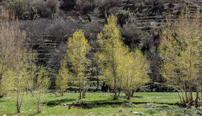 Setti Fatma Ourika-Tal