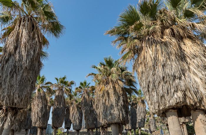 Tel Aviv Shlomo Lahat Promenade