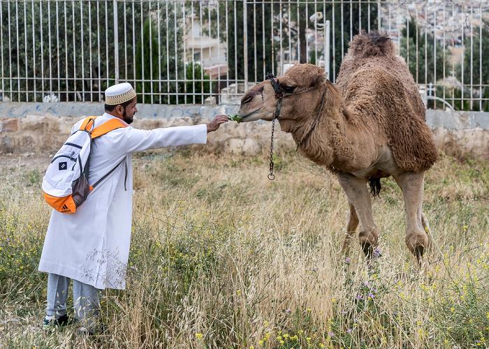 Ölberg: Kamel Jerusalem