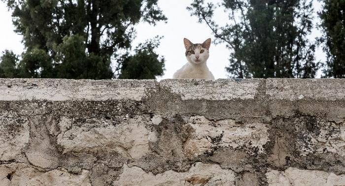 Kidrontal: Katze am Mariengrab Jerusalem