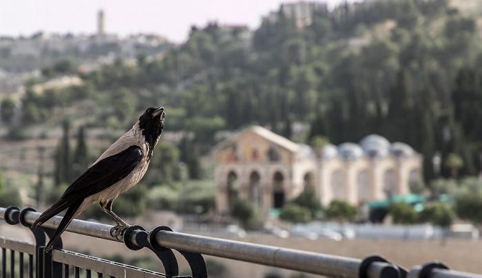 Jerusalem Derech HaOfel Kidrontal Kirche aller Nationen Todesangstbasilika