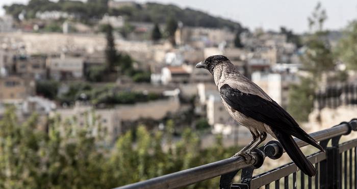 Jerusalem Derech HaOfel Silwan