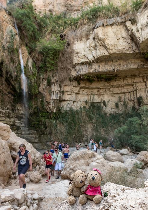 En Gedi Nature Reserve: Wadi David - Teddy und Teddine