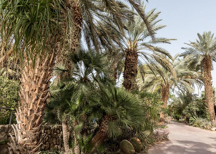 En Gedi Kibbuz: Botanischer Garten