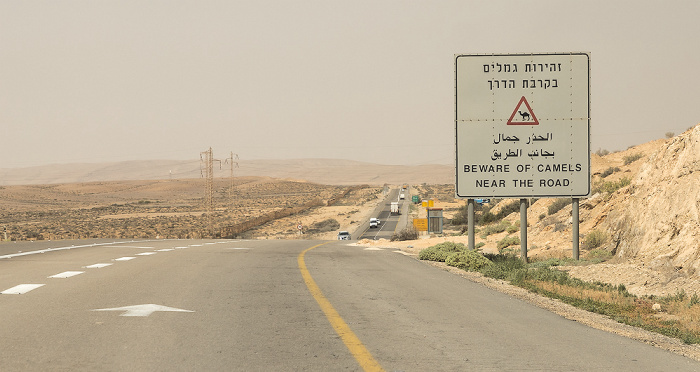 Negev Highway 25: Beware of camels near the road