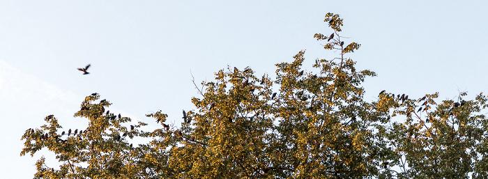 Uppsala Fyristorg: Vogelschwarm