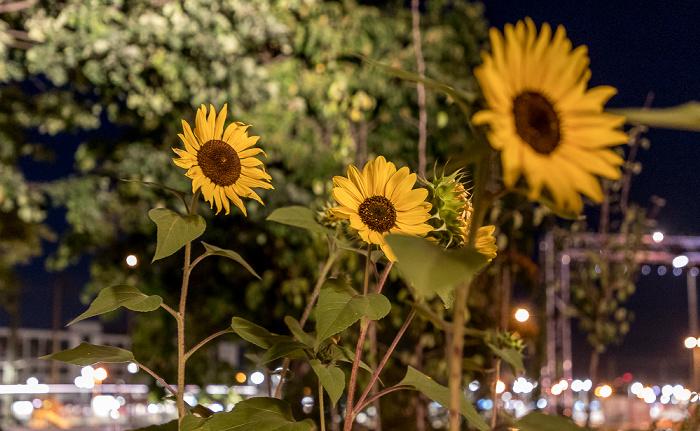 München Werksviertel Mitte: Container Collective - Sonnenblumen