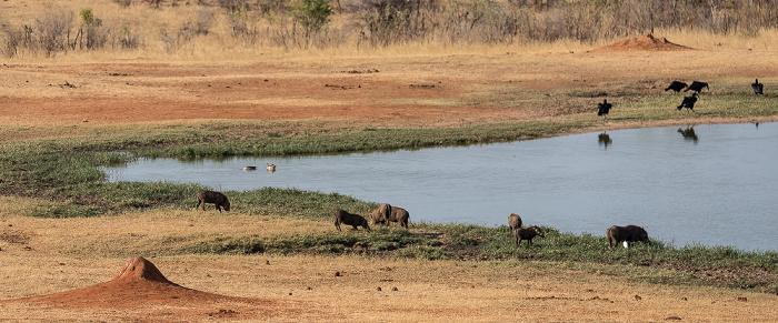 Sikumbi Forest Reserve Wasserloch an der Ivory Lodge