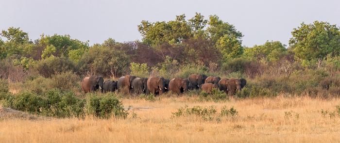 Hwange National Park Nyamandhlovu Pan Hide: Afrikanische Elefanten (Loxodonta africana)