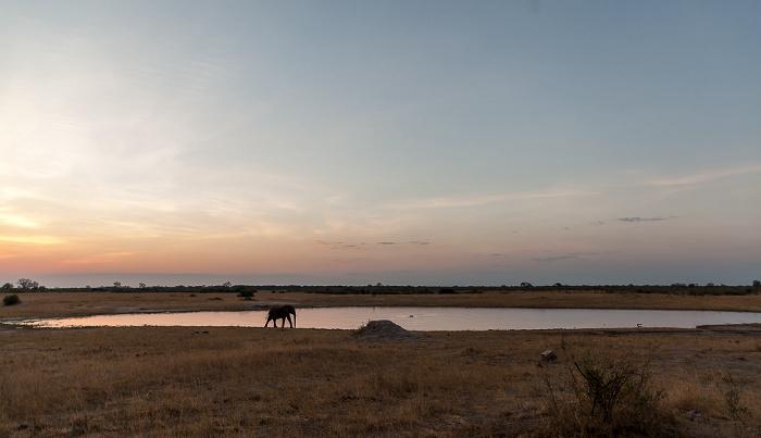 Hwange National Park Liwingi Pan: Afrikanischer Elefant (Loxodonta africana)