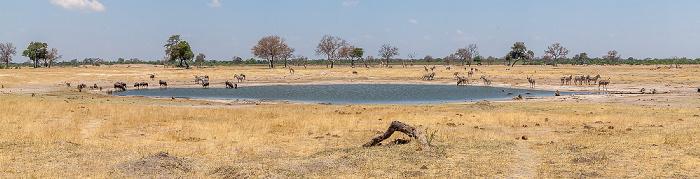 Hwange National Park Streifengnus (Blaues Gnu, Connochaetes taurinus), Steppenzebras (Pferdezebra, Equus quagga), Sambesi-Großkudus (Strepsiceros zambesiensis), Angola-Giraffen (Giraffa giraffa angolensis)