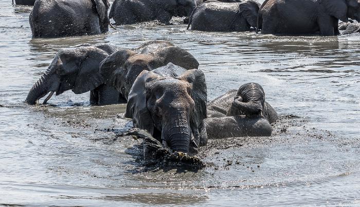 Hwange National Park Afrikanische Elefanten (Loxodonta africana)