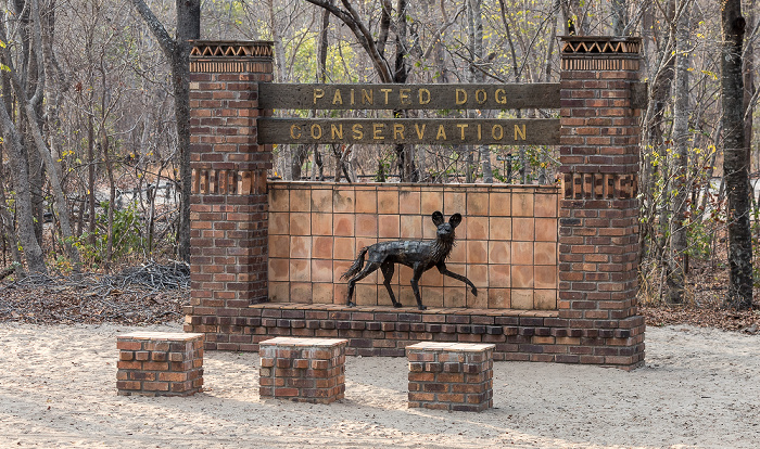 Sikumbi Forest Reserve Painted Dog Conservation