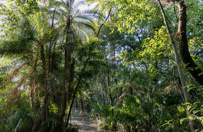 Victoria Falls National Park Regenwald