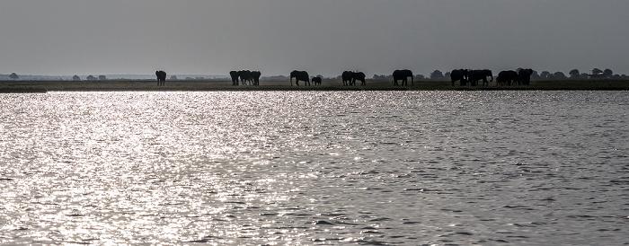 Chobe National Park Chobe, Afrikanische Elefanten (Loxodonta africana)