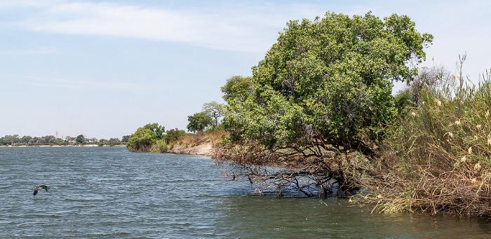 Kazungula Chobe