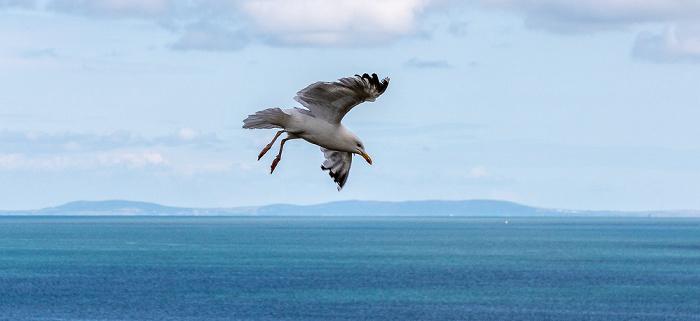 Pembrokeshire Coast National Park Möwe