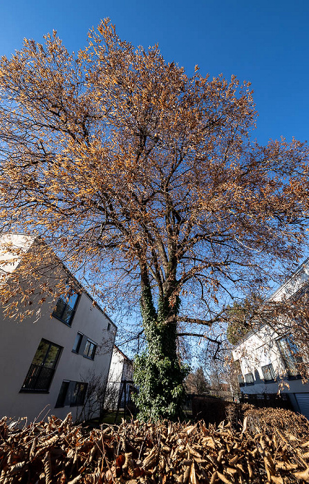 Berg am Laim: Rofanstraße München
