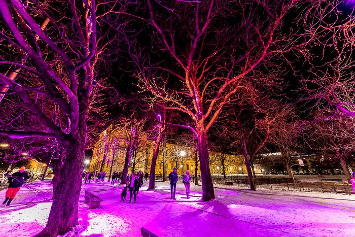 Lichtaktion Kunstareal: Installation Licht Wald - Barer Straße München